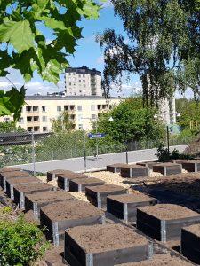 Pallkragar vid Stövardalens stadsodling i Rågsved